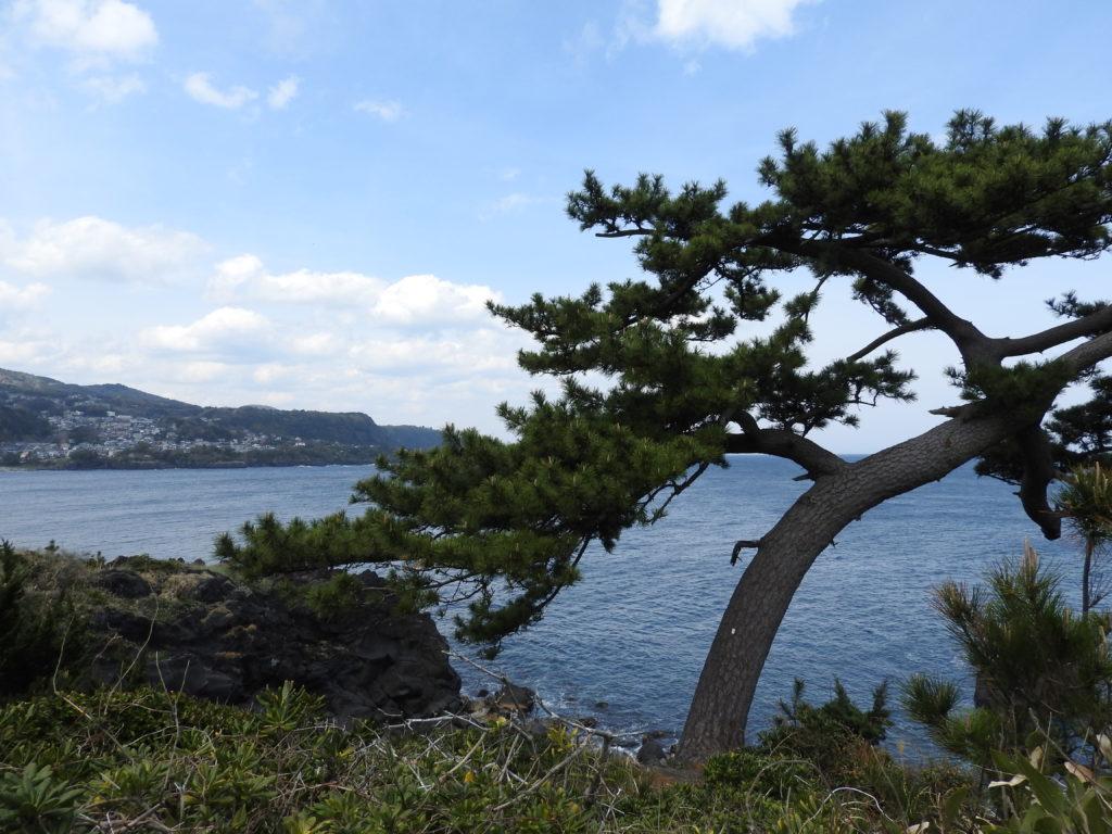 城ケ崎ピクニカルコース松と海