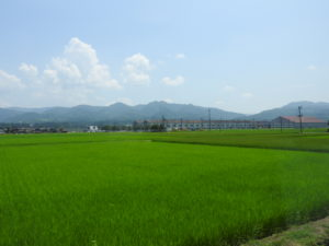 新潟田園風景