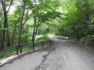 吐竜の滝一本道